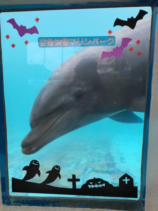 イルカはイルカ好きな人が分かるのか?