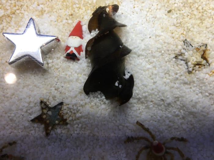 ネコザメクリスマス