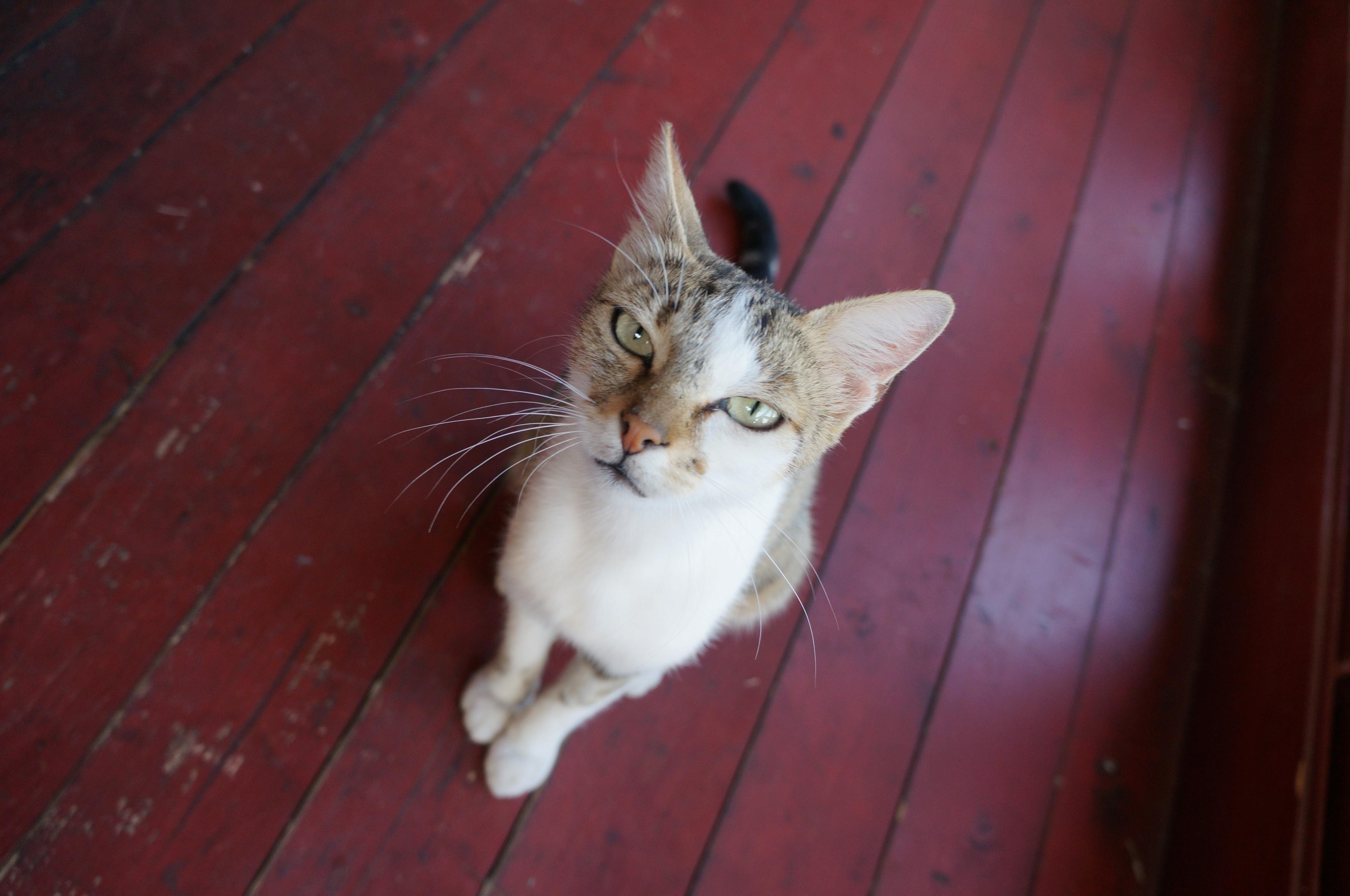 猫もりだくさんのセルビア