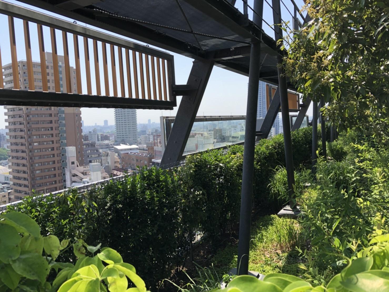 豊島区役所 テラス緑